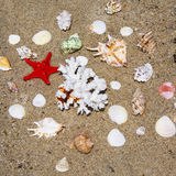 Coral, seashells and starfish Royalty Free Stock Photo