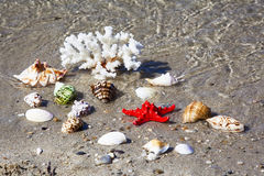 Coral, seashells and starfish on seashore. Shallow depht of fiel Stock Images