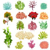 Coral and seaweed. Underwater flora, sea water seaweeds aquarium kelp and corals. Ocean plants vector set royalty free illustration
