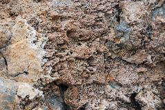 Coral sediment petrified Royalty Free Stock Photos