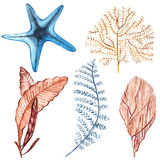 Coral set. Aquarium concept for Tattoo art or t-shirt design isolated on white background. Royalty Free Stock Image
