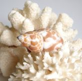 Coral and shell Stock Photos