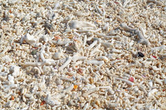 Coral and shell texture Stock Images