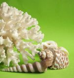 Coral and shells Stock Photos
