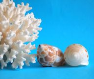 Coral and shells Stock Image
