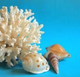 Coral and shells Stock Images