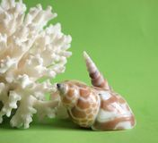 Coral and shells Stock Photo