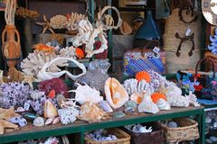 Coral shop. Sealife marine shop with gifts and souvenirs stock images