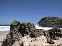 coral fotografie stock libere da diritti