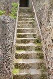 Coral Staircase Fotografia Stock Libera da Diritti