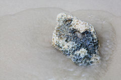 Coral stone on the beach Stock Image