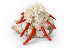 Coral on stone with necklace made of corals Stock Photos