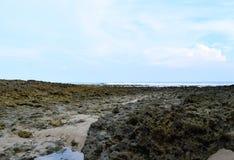Coral Stones an der Küstenzone gegen blauen Himmel - abstrakter natürlicher Beschaffenheits-Geologie-Ozeanologie-Hintergrund lizenzfreie stockfotos