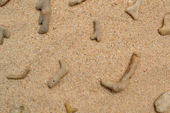 Coral stones on a sandy beach - 5293 Royalty Free Stock Photos