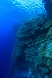 Coral structure inthe red sea. Coral structure in the tropical reef of the red sea Stock Photo