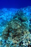 Coral structure in the red sea. Coral structure in the tropical reef of the red sea Royalty Free Stock Photo
