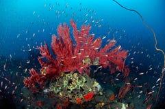 Coral suave Fotografía de archivo libre de regalías