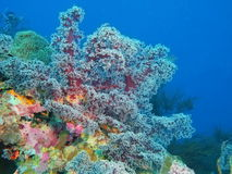 Coral suave Foto de archivo