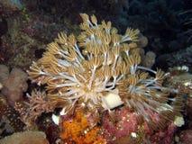 Coral suave de la flor Foto de archivo libre de regalías
