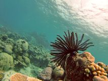 Coral suave en la gran barrera de coral imágenes de archivo libres de regalías