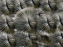 coral tło Obraz Royalty Free