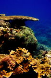 Coral -table formation. Scenic seascape showing table formation in coral garden. The Philippines Stock Images