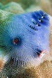 Coral Texture imagem de stock