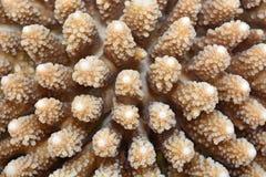 Coral Texture Stock Photos