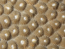 Coral texture Stock Photo
