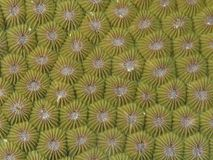 Coral texture. In Bohol sea Philippines Royalty Free Stock Photos