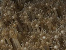 Coral texture. In Bohol sea Philippines Royalty Free Stock Photo
