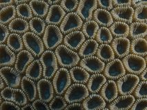 Coral texture. In Bohol sea Philippines Stock Photos