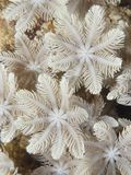 Coral texture. In Bohol sea Philippines Royalty Free Stock Photography