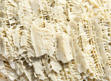 Coral texture. Close up on the surface of reef coral stock photo
