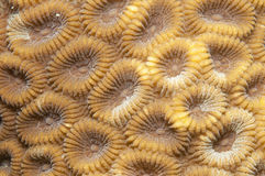 Coral texture royalty free stock photos