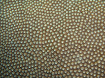 Coral texture Royalty Free Stock Photo