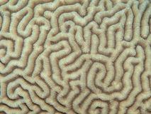 Coral texture Stock Photos