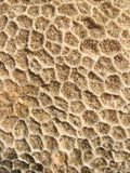 Coral texture. Sea coral background royalty free stock photography