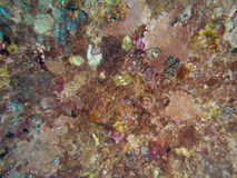 Coral texture on ship wreck Royalty Free Stock Photography