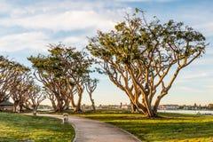 Coral Trees au nord de parc d'Embarcadero à San Diego photographie stock libre de droits