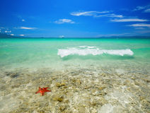 Coral tropical beach Stock Images