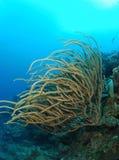 Coral underwater Stock Image