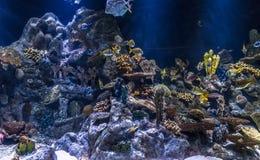 Coral Underwater Imagen de archivo