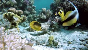 Coral, Underwater, The corals and fish. stock footage