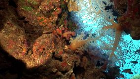 Coral underwater of Red sea. Bright marine nature on background of beautiful lagoon stock footage