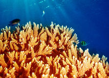 Coral underwater reef of Maldives island Stock Photo