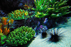 Coral and urchin and fish stock photo