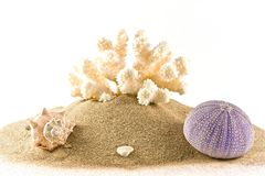 Coral,urchin and mussel on sand Stock Photo