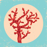 Coral vermelho Fotos de Stock Royalty Free