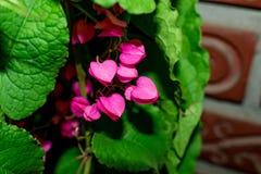Coral Vine stock fotografie